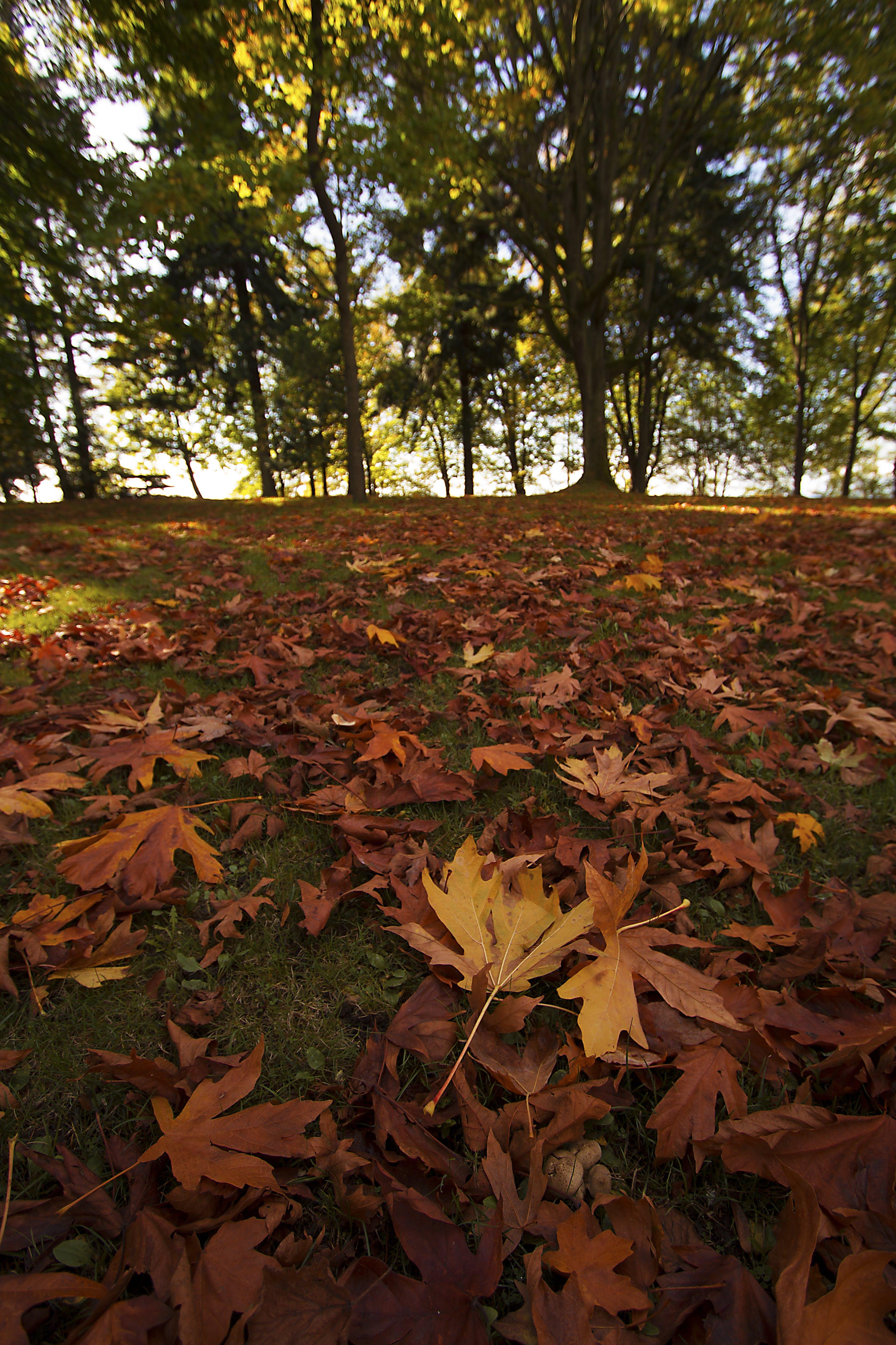Gratis lagerfoto af efterårsblade, falde farver, træer