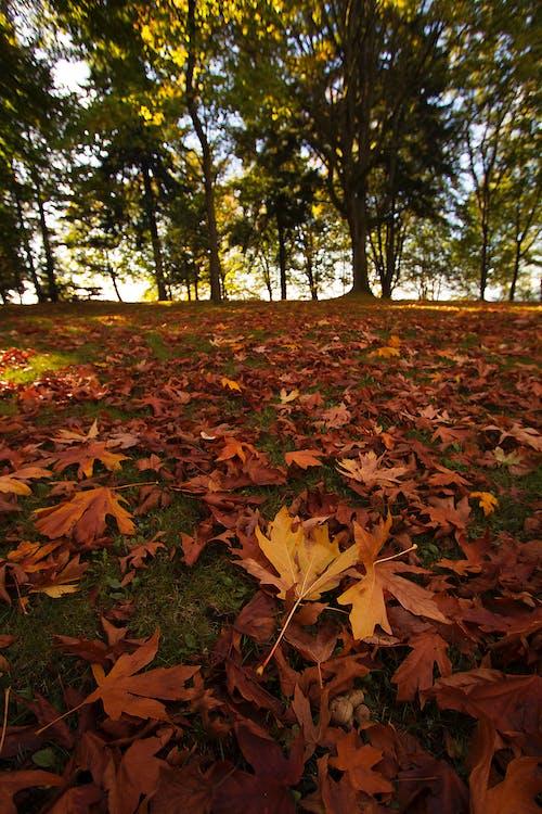 Photos gratuites de arbres, couleurs d'automne, feuilles en automne