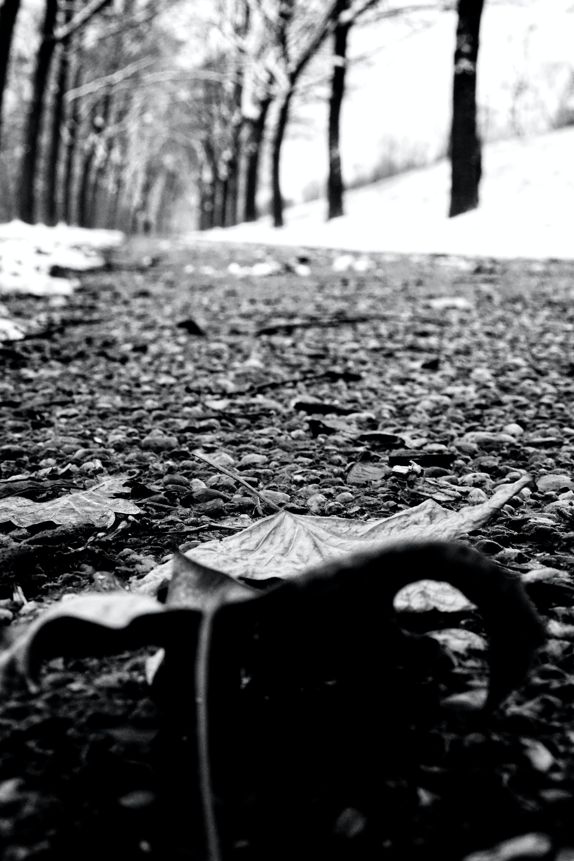 Kostenloses Stock Foto zu fußweg, schnee, winter