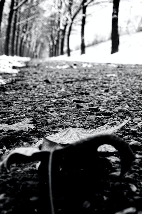 Základová fotografie zdarma na téma černobílá, chodník, sníh, zima