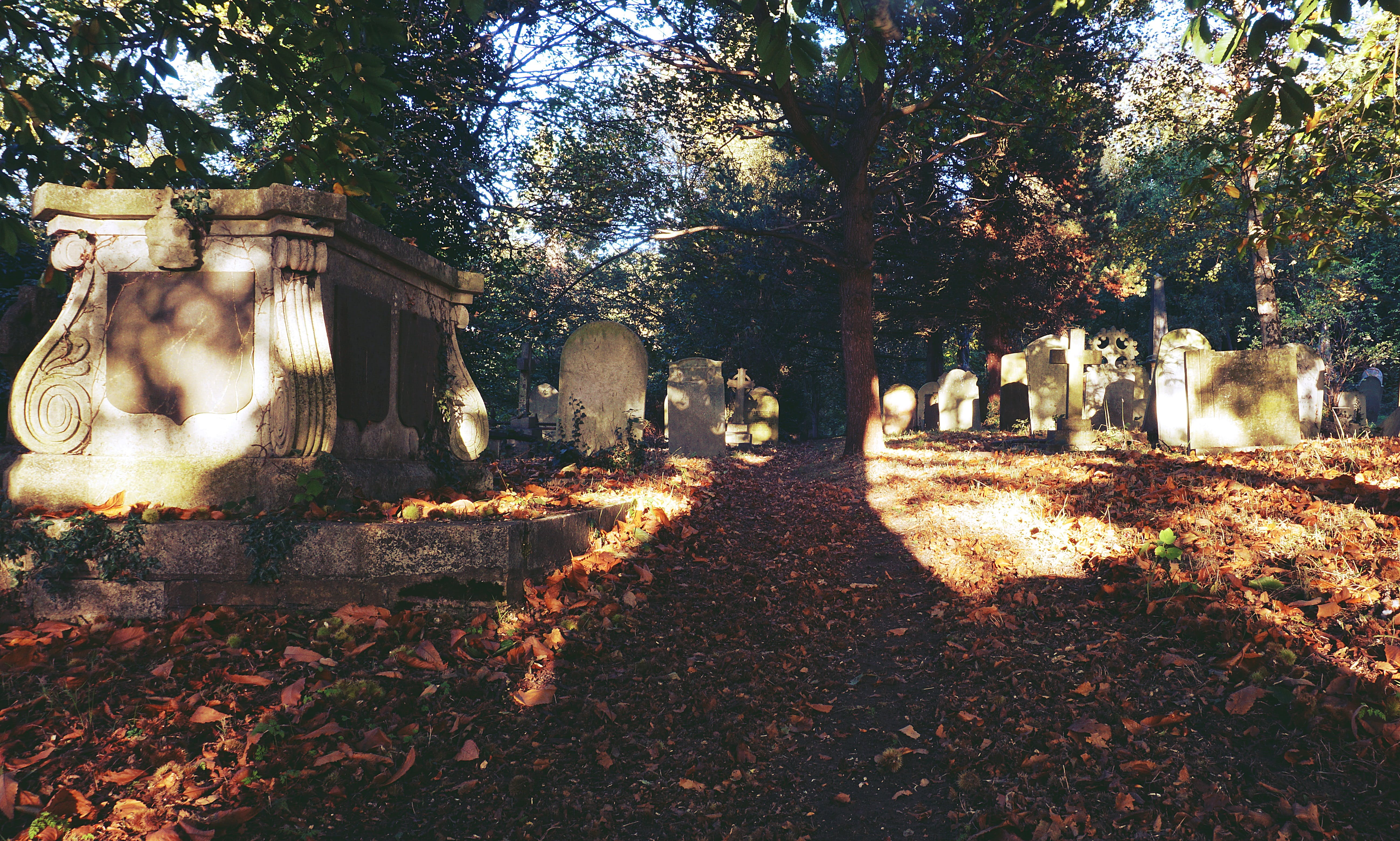 Free stock photo of autumn, autumn leaves, cemetery, grave
