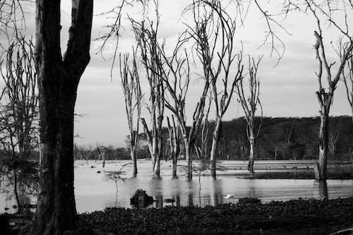 老树 的 免费素材照片