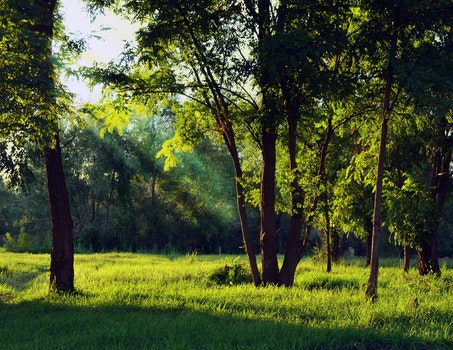 Green Forest Under White Sky during Daytime
