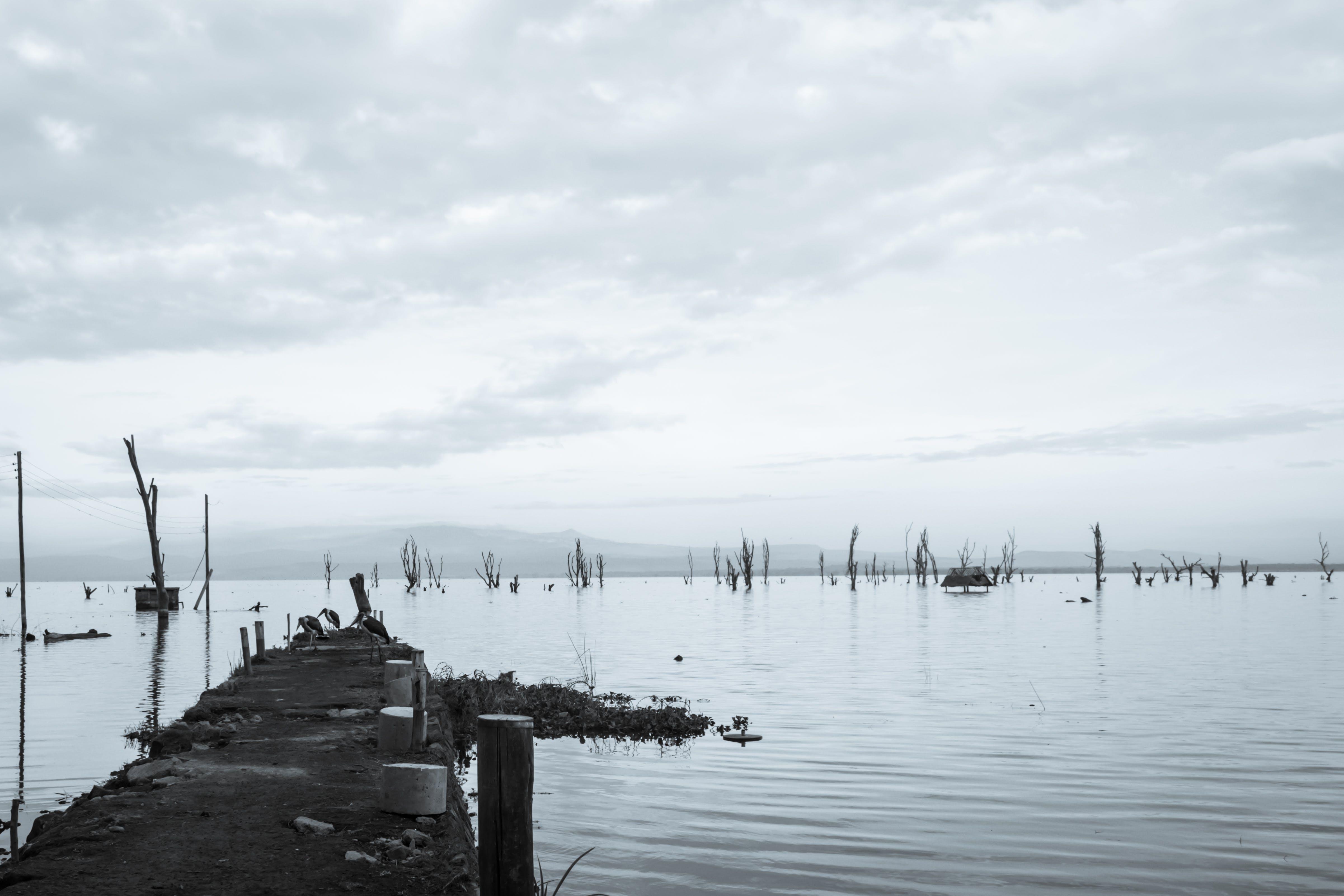 Free stock photo of lake pier