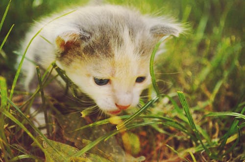 White and Gray Kitten in Grass Field during Daytime