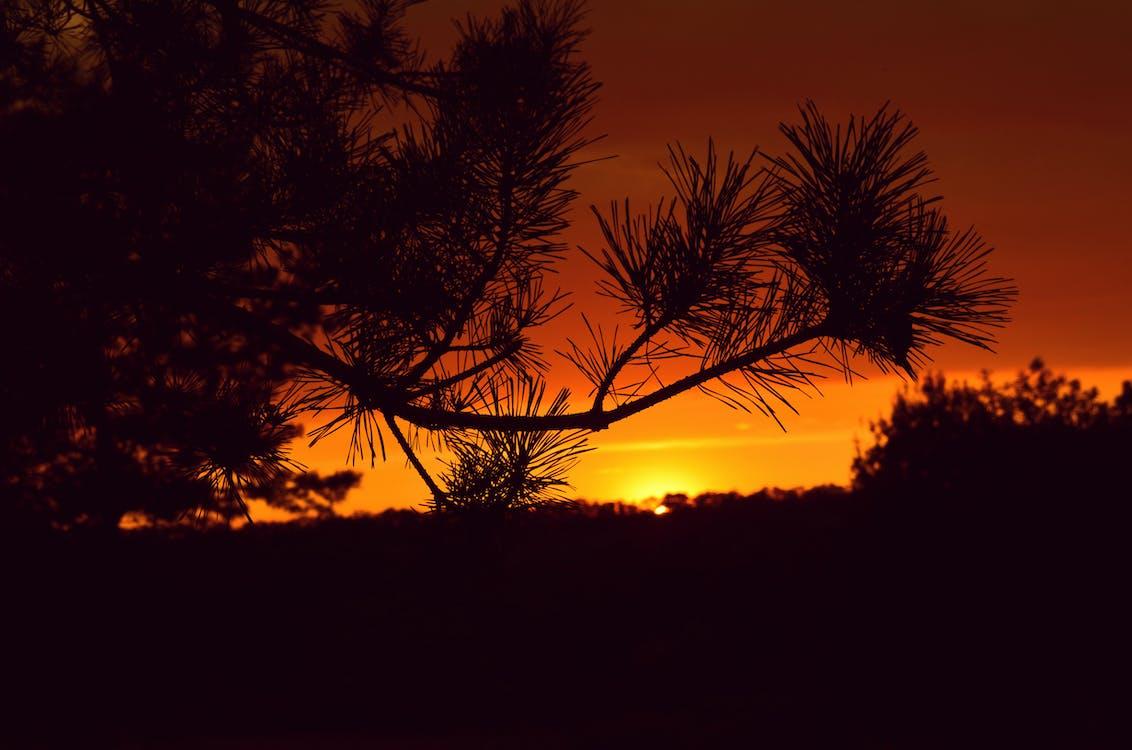 日出, 日落, 樹