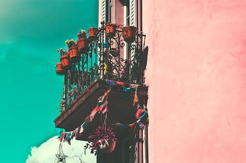 Free stock photo of balcony, building, flowers, street