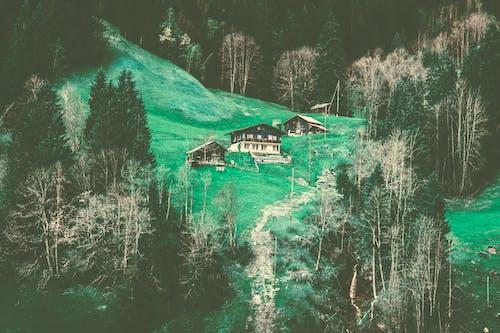 Kostenloses Stock Foto zu bäume, friedlich, gruselig, häuser