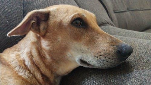 Fotos de stock gratuitas de perro de animales