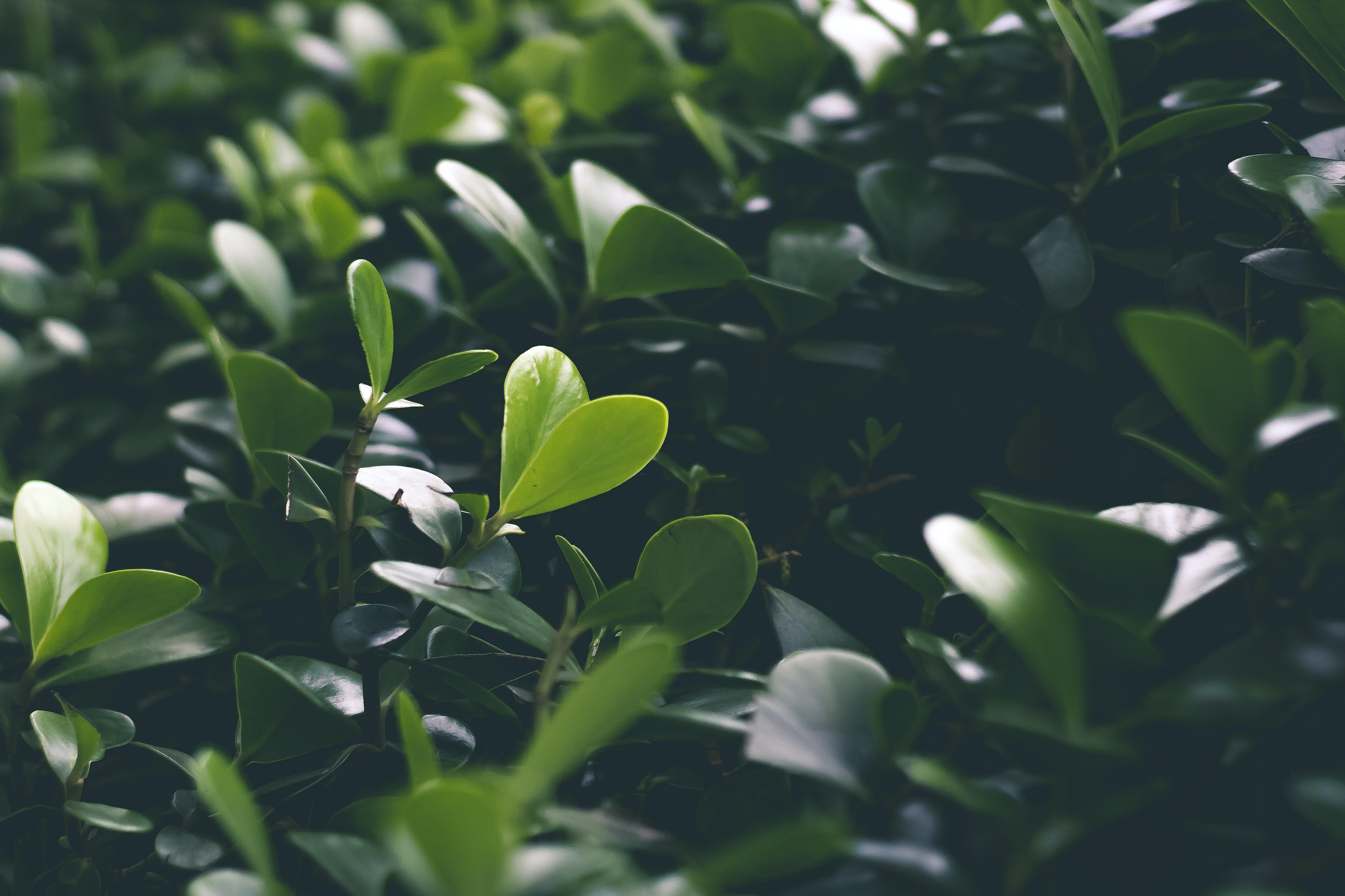 Ảnh lưu trữ miễn phí về màu xanh lá, sự phát triển, thực vật, vườn