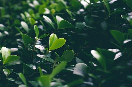 Fotos de stock gratuitas de crecimiento, hojas, jardín, planta