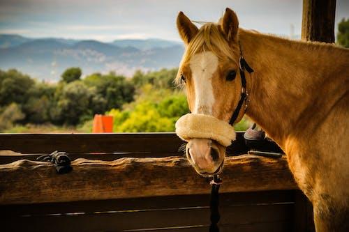 ahır, ahşap, alan, at içeren Ücretsiz stok fotoğraf