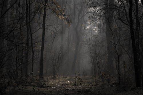 Gratis stockfoto met angstaanjagend, bomen, bossen, dageraad