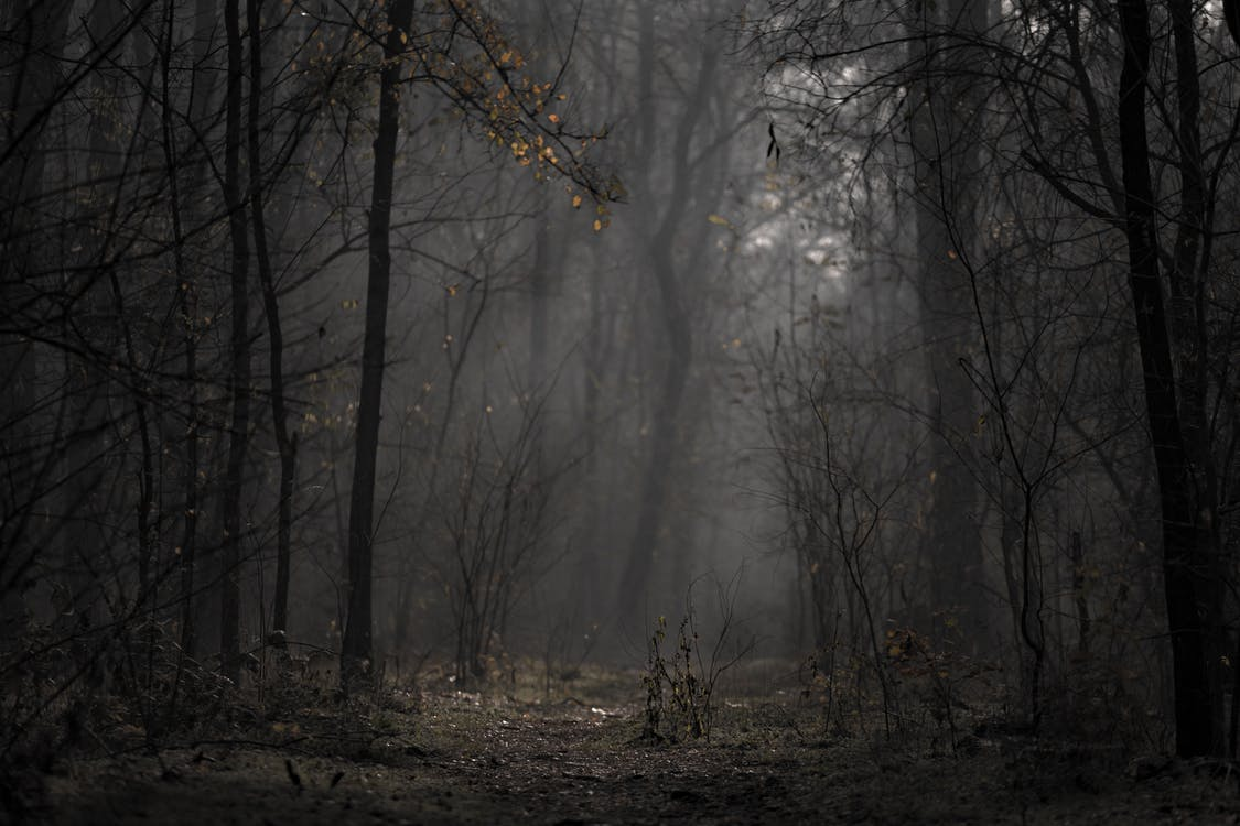 Landscape Photo of Forest