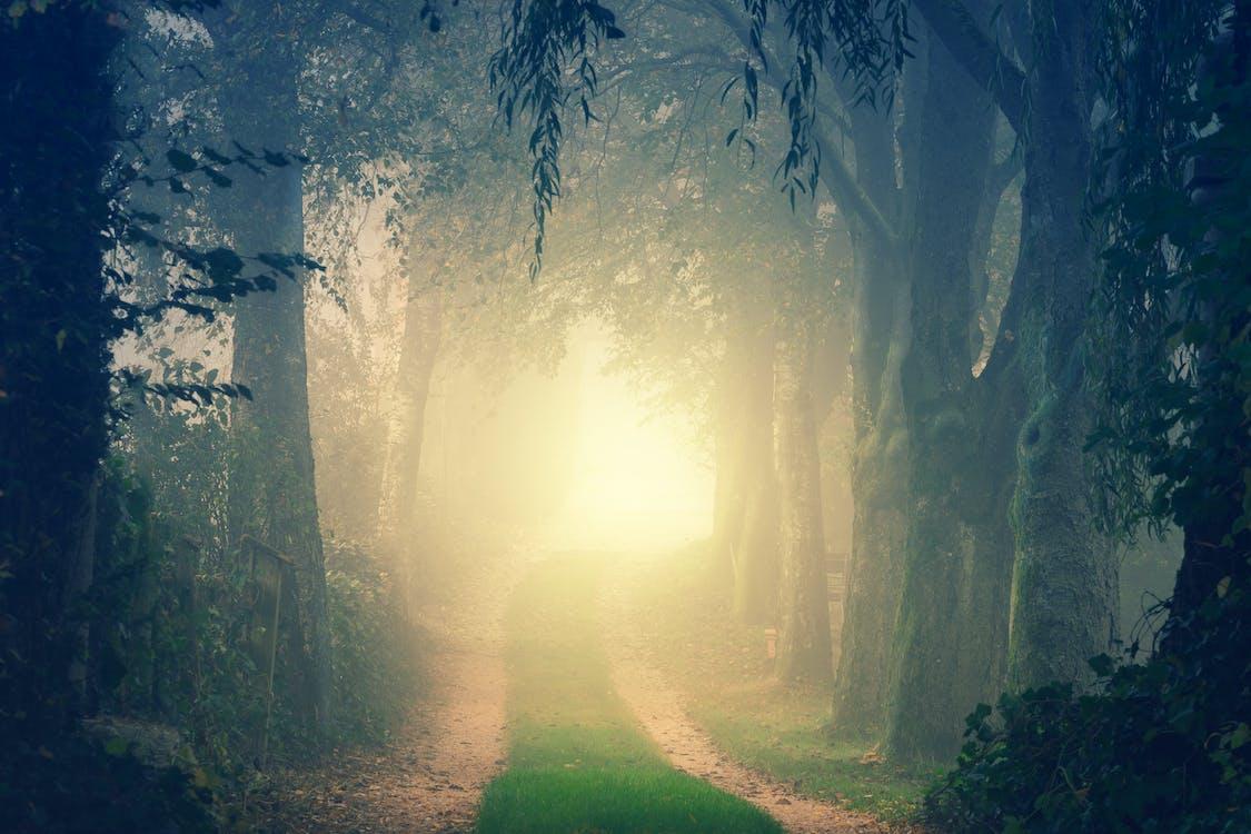 木々の間の道路の風景写真