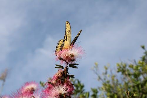 Ilmainen kuvapankkikuva tunnisteilla hyönteinen, kasvikunta, kasvu, kirkas