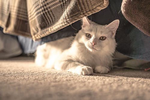 Бесплатное стоковое фото с глаза, домашняя кошка, животное, кошачьи