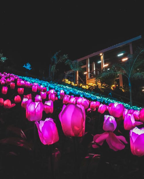 Imagine de stoc gratuită din artă, culoare, flori, iluminat