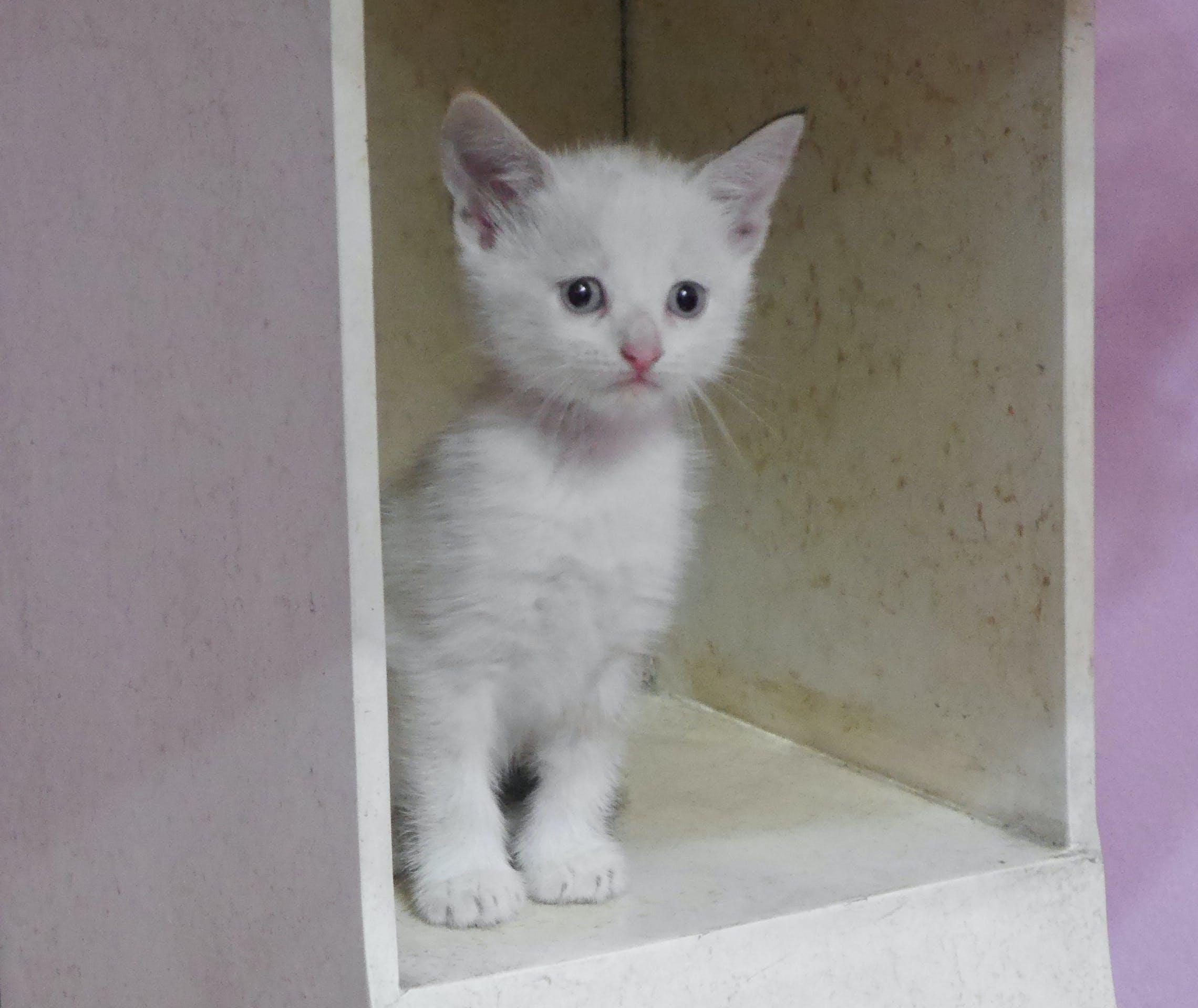 Gratis arkivbilde med gatito, kattunge