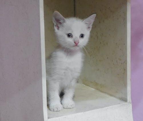 Ảnh lưu trữ miễn phí về gatito, mèo con