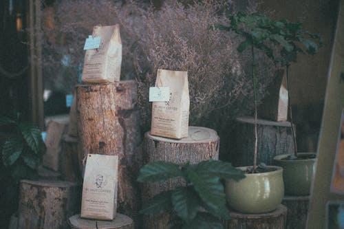 Kostnadsfri bild av anläggning, behållare, fokus, kaffe