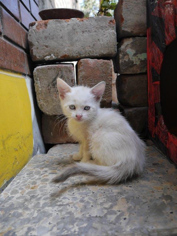 gatito, kitten