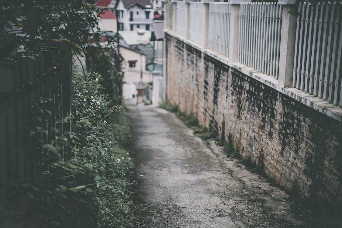 beton duvar, bitkiler, bulanık arka plan