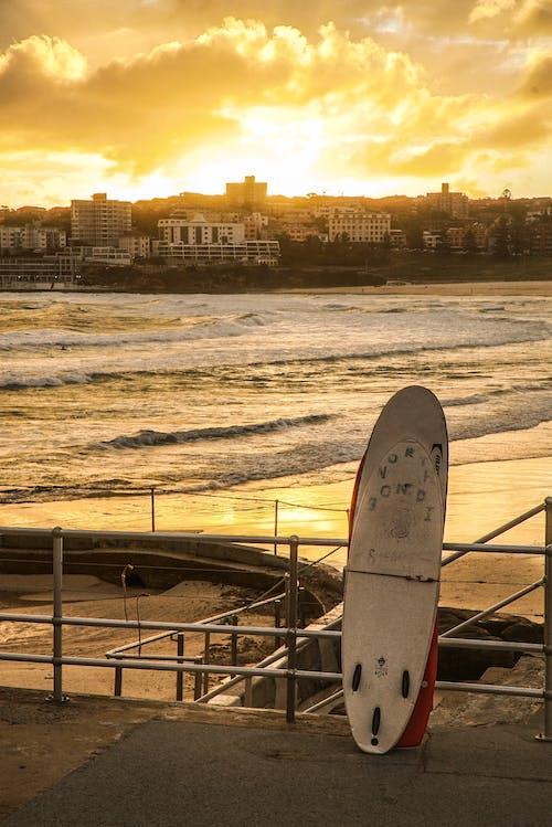 바다, 부두, 새벽, 서핑보드의 무료 스톡 사진