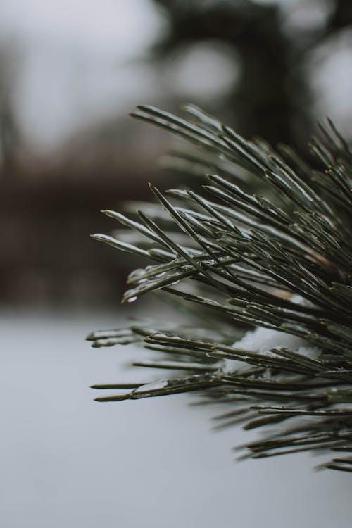 冬季, 冷, 凍結的