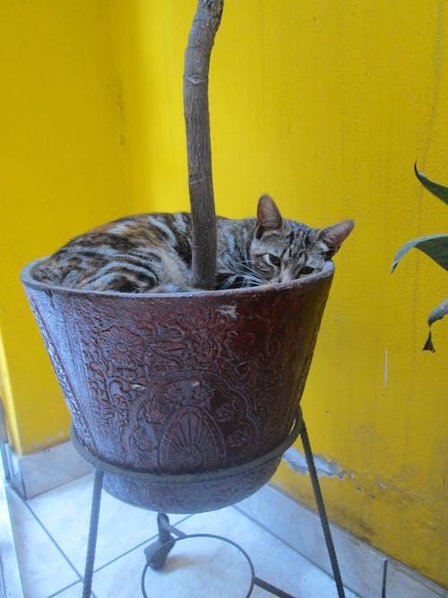 คลังภาพถ่ายฟรี ของ gatito, ลูกแมว