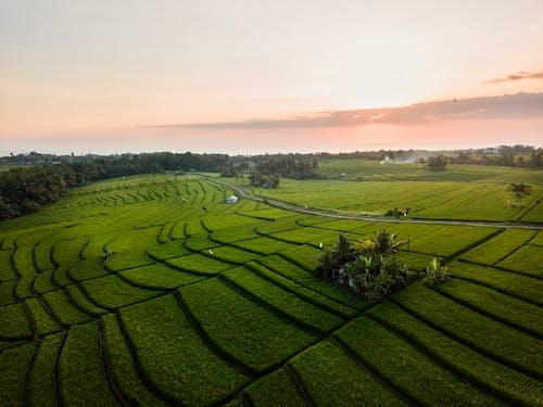 Ảnh lưu trữ miễn phí về Indonesia