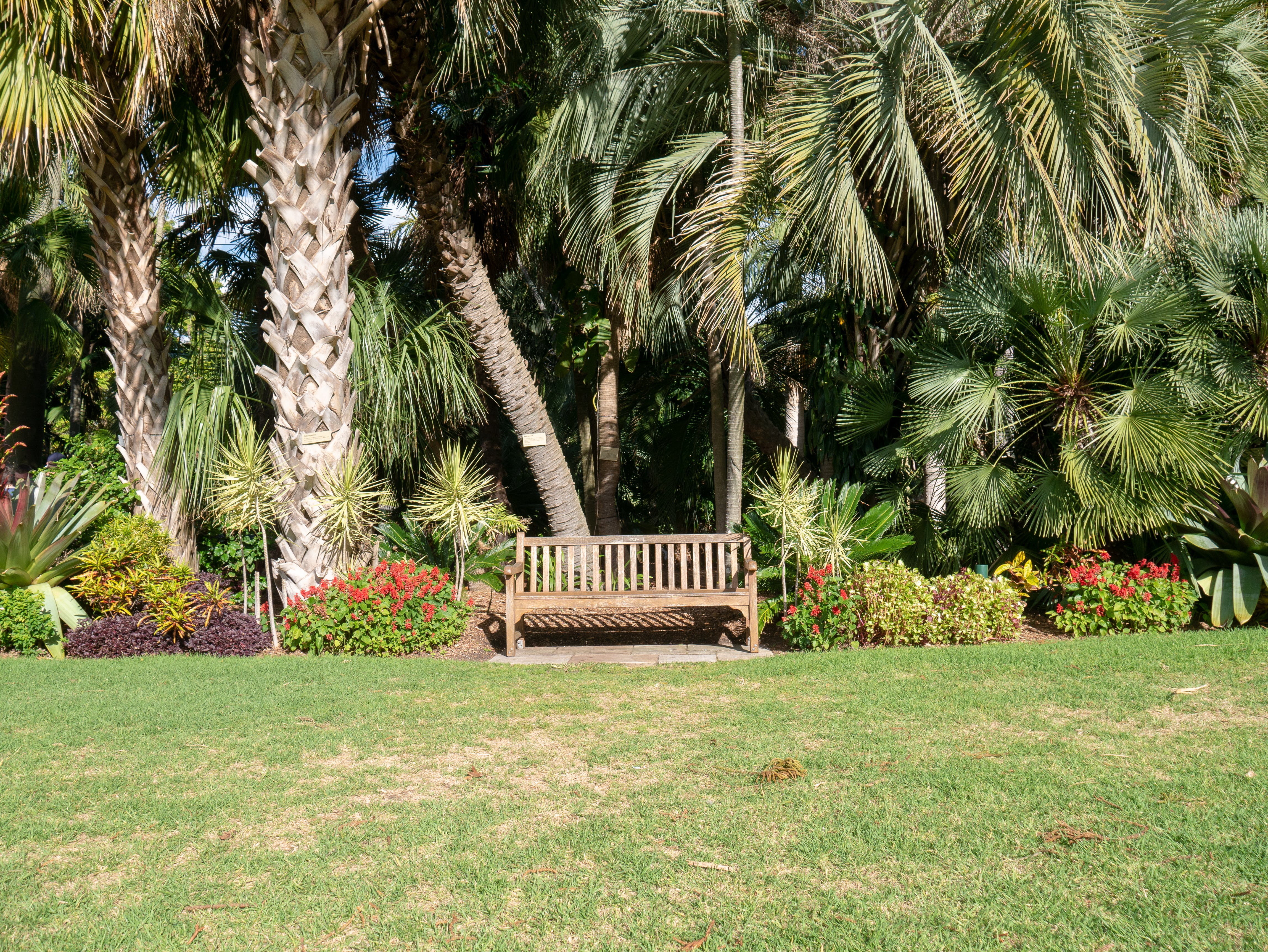 Empty Brown Wooden Bench in a Park