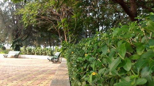Fotos de stock gratuitas de belleza en la naturaleza, bonito, Buenos días