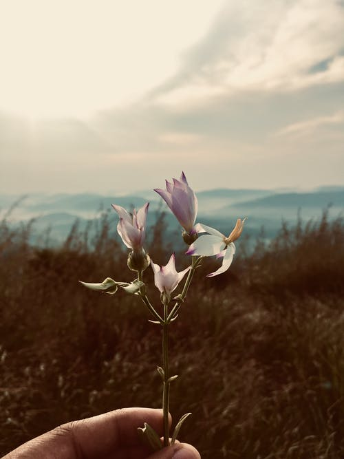 Fotobanka sbezplatnými fotkami na tému farba, flóra, hracie pole, ihrisko