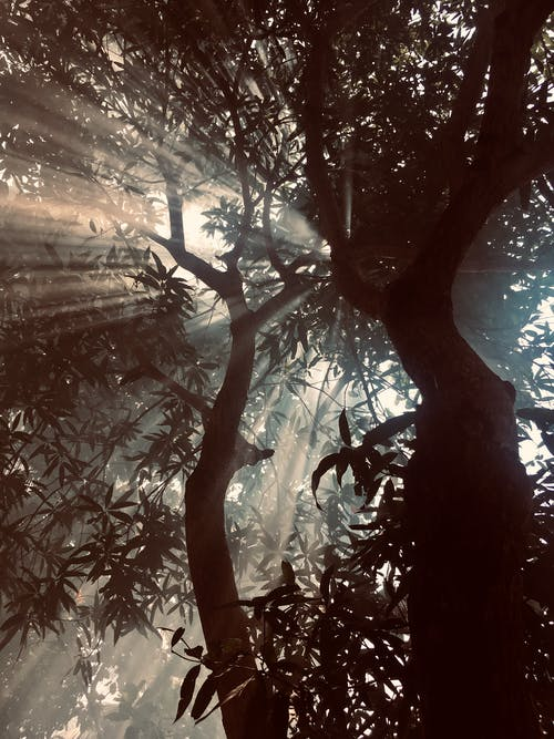 Бесплатное стоковое фото с ветви, дерево, с подсветкой, солнечный свет