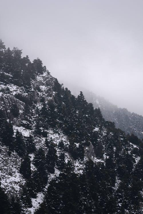 Foto profissional grátis de árvores, cênico, clima, enevoado