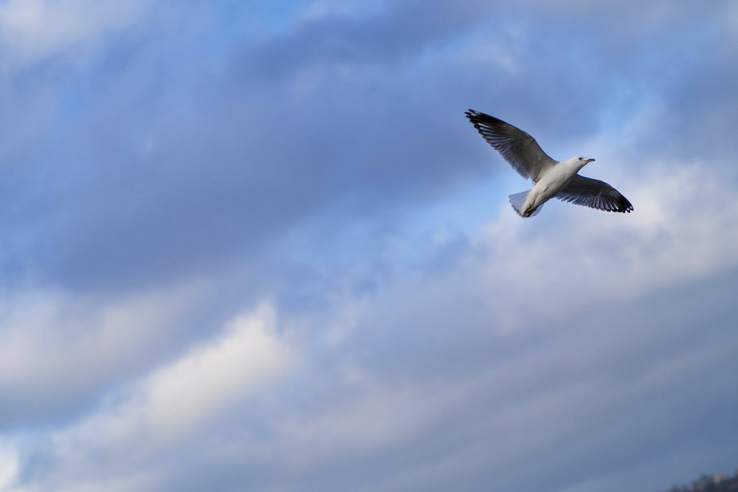 Photo of Seagull Flying Across The Sky