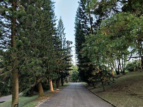 Základová fotografie zdarma na téma kent ridge park