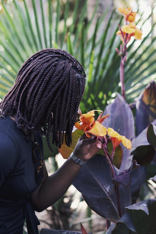 Free stock photo of black person, botanical, bright