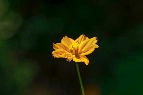 Free stock photo of dark, flower, macro