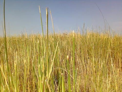 天然草纸壁纸 的 免费素材照片