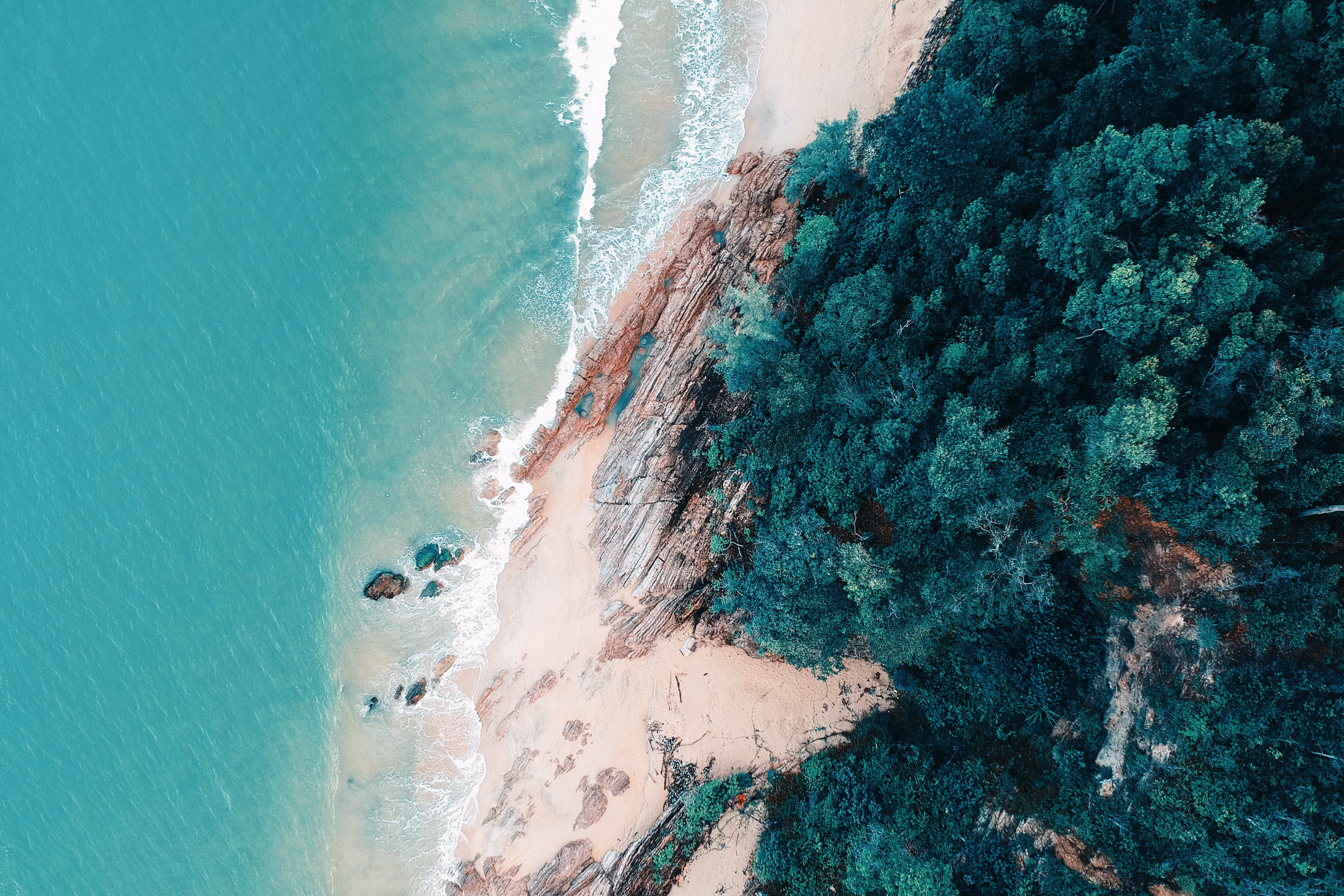 ağaçlar, çevre, dalga, deniz içeren Ücretsiz stok fotoğraf