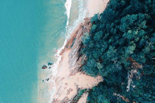 Foto d'estoc gratuïta de a la vora de l'oceà, aigua, arbres, fer surf
