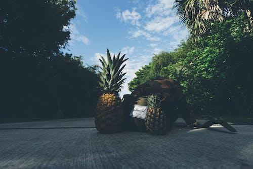 건강한, 경치, 과일, 구름의 무료 스톡 사진