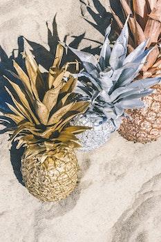 Free stock photo of beach, sand, summer, pineapple