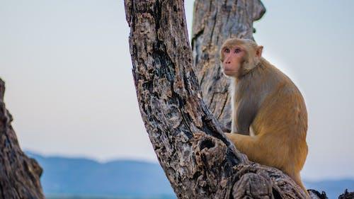 Fotobanka sbezplatnými fotkami na tému jaipur, kôra, opica, shotonsight