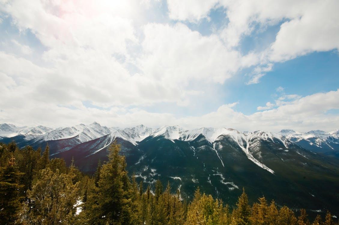 bartre, blå himmel, fjell