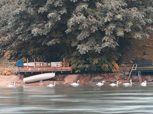 Gratis lagerfoto af båd, båddæk, bænk, dagslys