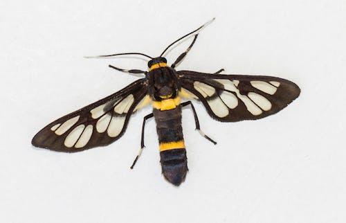 Бесплатное стоковое фото с бабочки, жуки, крылья, макросъемка