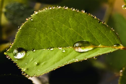 Бесплатное стоковое фото с зеленый, капельки воды, капли воды, капли дождя